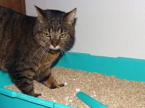 Désodoriser la litière du chat