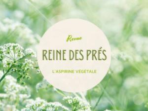 Read more about the article Les bienfaits de la Tisane Reine des Prés